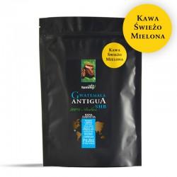Tommy Cafe - Gwatemala Antigua SHB - 250g - kawa mielona